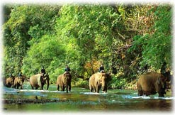 Northern Thailand's Elephants